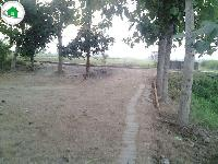 1 5 Bigha in jagdishpur for sale