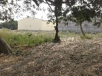 Land available for sale in Baruni