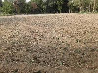 54 gunthas plot available for sale in Bariarpur- Baruni