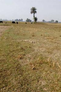 Commercial Plot for Sale in Sitamarhi