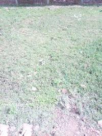 Commercial Plot for Sale in Buxar
