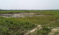 Commercial and Residential Plot for Sale in Araria