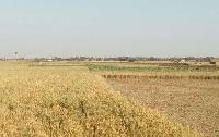 1 bhigha agriculture land for sale in Darbhanga