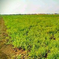 27 Kattha Plot for Sale in Patna