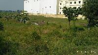 270 kattha Land for Sale in Bhagwanpur Ratti Area