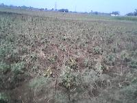 Rasidansiyal Plot