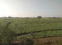 6 Bigha Land With Muzaffarpur - Mahua 2 Lane Highway, Near - Kerma ,purushtampur Village