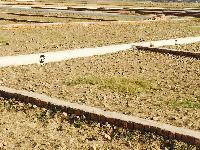 सिवान ,बिहार मे हम आपके लिए लेकर आए है आपके सपनो का घर बनाने के लिए आवासिय प्लाट केवल 25percent बुकिंग अम�