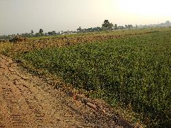 20 Katha Land For Sale in Jehanabad