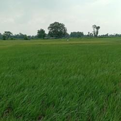 Buy On Highway Property N. H 139, In Naubatpur, Patna Aurangabad Highway