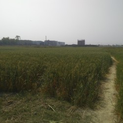 Plot Available For Sell In Mahua Hajipur Nh Road
