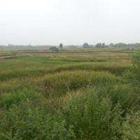 Bahut He Sasta Plot Best Location Par Sale Kai Liyai Available Hi