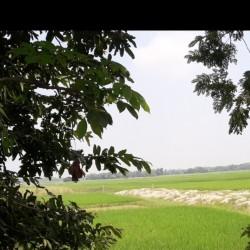 Residential Plot At Simra, Ajamagar,kadrabad,darbhanga