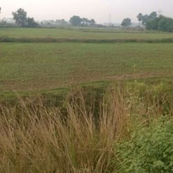 31acre Farm/large Land For Sale In Rural Area Of Purnea District
