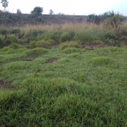 5 Kattha 6 Dhur Plot For Sale In Purnia