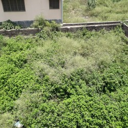 Plot For Sale Near Mount Assisi School ,rani Ka  Talab Bhagalpur