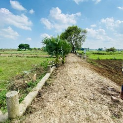 Freehold Plot In Bihta For Sale