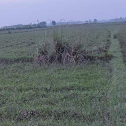 Agricultural Land Plot For Investment Purpose