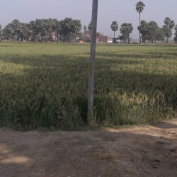 Free Hold Agriculture Land For Sale In Katihar Pethiya Bazar