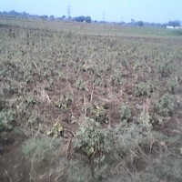 Rasidential Plot for Sale in Patna
