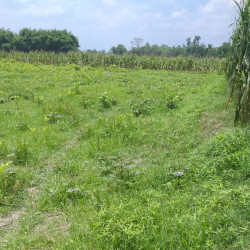 Commercial Plot For Sale Near Chandwa Petrol Pump