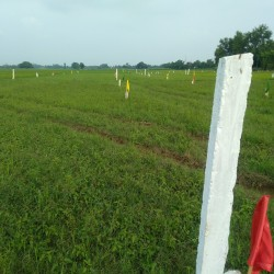 Investment Plot Available