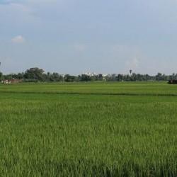 Kheti Karne Ka Zameen Sale Ke Liye Hain