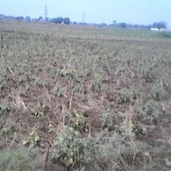 Residential Plot for Sell in Patna