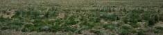 Sale For Land in Jamalpur