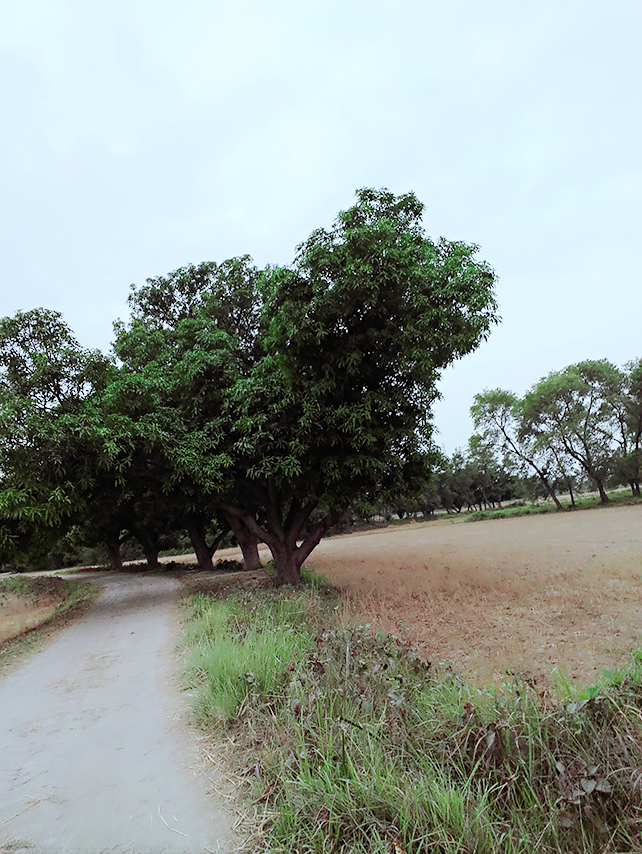2 Bigha 5 Kattha Land For Sale In Uchkagaon Block District Gopalganj Bihar