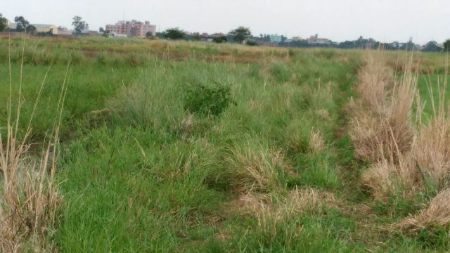 Residential Plot available for sell in sampatchak