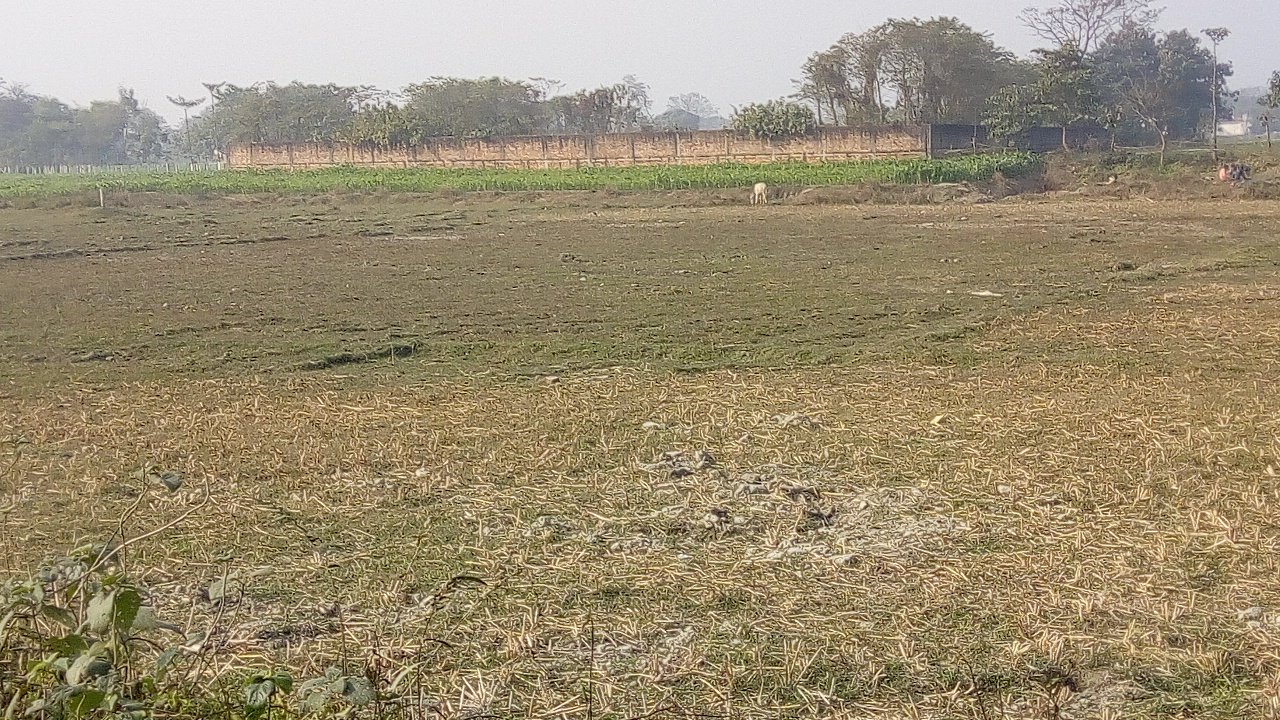 15 Kattha Residential Land Plot For Sale in Katihar