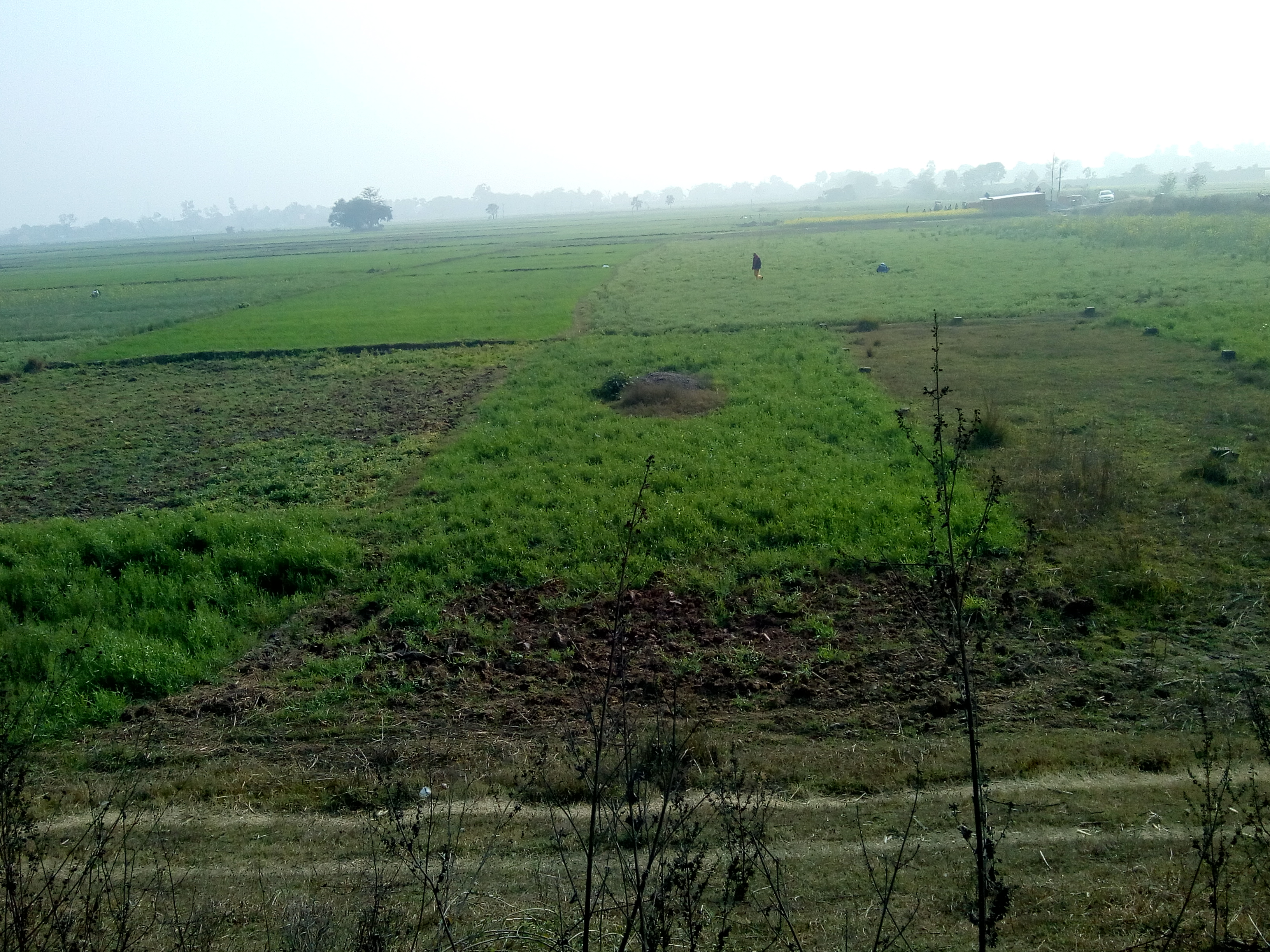 Agriculture Plot For Sale In Dulhin Bazar- Paliganj Area