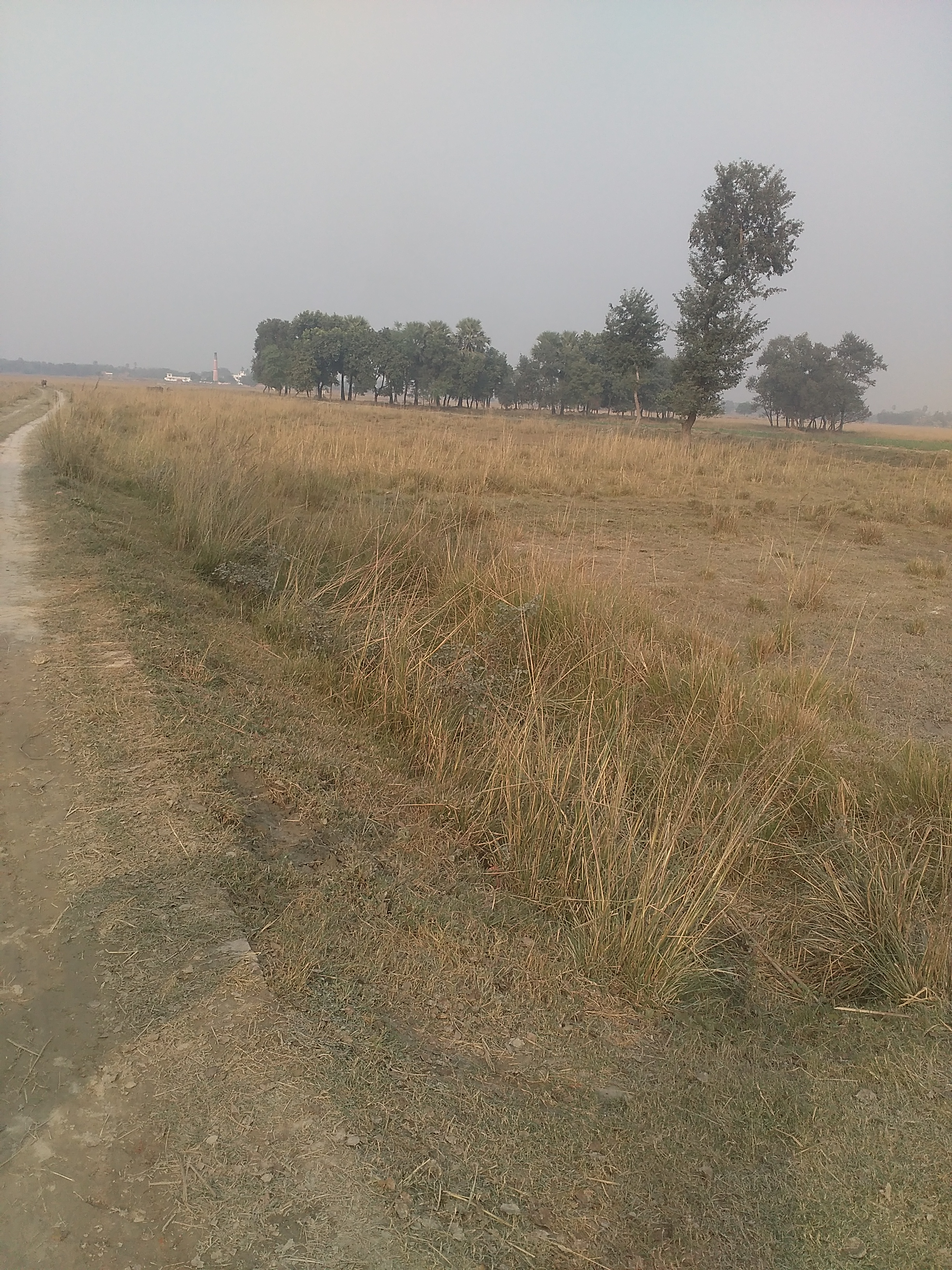 Residential Land For Sale in Chhapra