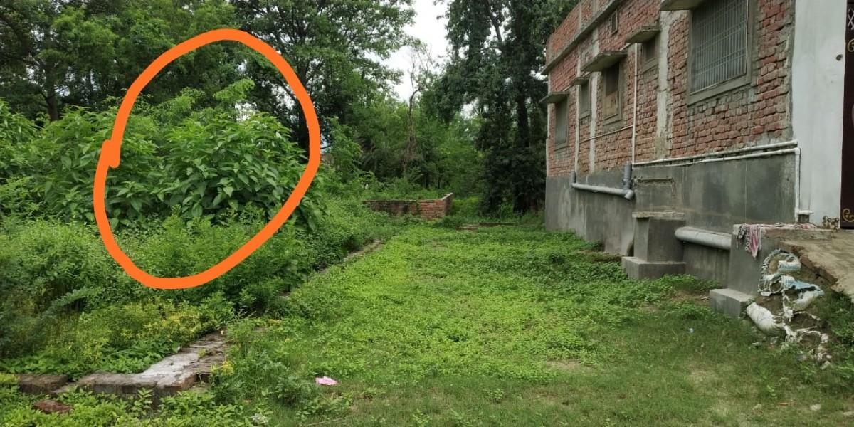15 Dhoor Land For Sale In Sekhpur Akharaghat