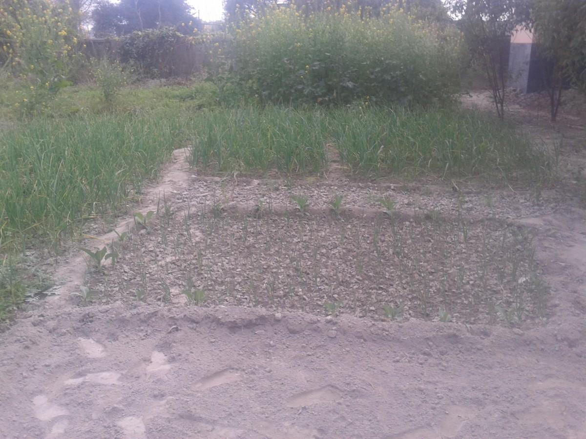 Residential Plot Near Baba Dham Mairwa