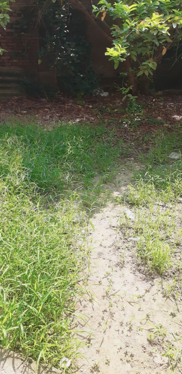 Residential Plot In Agarwa For Sale