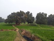 Commercial Plot For Sale Near N-h 57 Khartua
