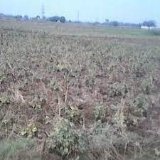 Rasidanshiyal Plot For Sale