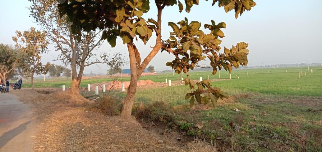 Farm House Property Near Bihta Railway Station