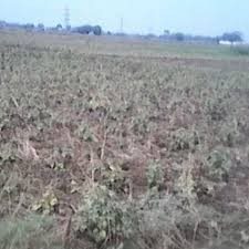 Rashidansial Plot for Sale
