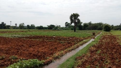 Agricultural Land Beside Road In Bihar, Purina For Sale