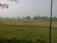 1 Acre Available For Lease On Kamtaul- Jogiara Road (dist- Darbhanga)